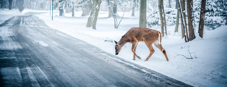 What To Do If You Hit a Deer in Hamilton and Surrounding Areas